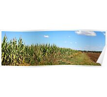 Rural Australia - Corn Crop in the Country Poster