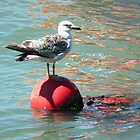 Seagull on a Buoy by MyPixx