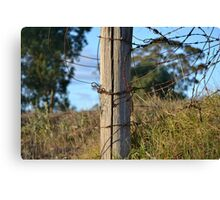 Old Wooden Fence Canvas Print