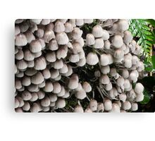 The fungi family Canvas Print