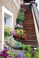 Flowers on the stair by Arie Koene