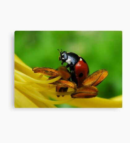 I love your food Lily Canvas Print