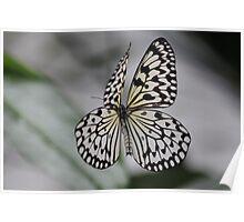 Paper Kite in flight Poster