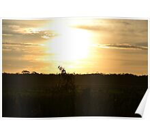 Tree Sunset Poster