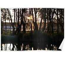 Tree Sunset River Poster