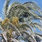 Date Palm Fronds in the Cyprus Sun by James Hogarth