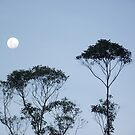 trees and the moon from my backyard by myhobby
