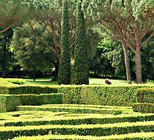 Hedge Steps-Italy by Deborah Downes