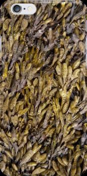 Seaweed by M. van Oostrum