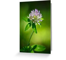 Purple Clover Flower Greeting Card
