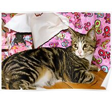 Cutie Cat by name and by nature Poster