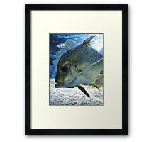Friendly Fish Framed Print