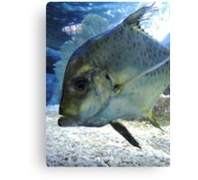 Friendly Fish Canvas Print