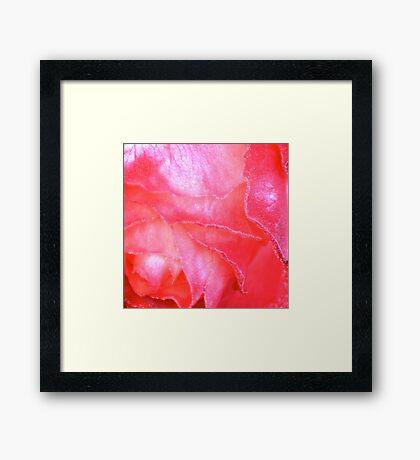 Frozen Rose Framed Print
