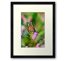Colorful Viceroy Butterfly Framed Print