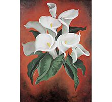 Calla Lilies On A Red Background Photographic Print