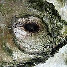 The eye by Photos - Pauline Wherrell