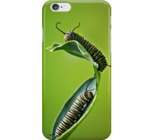 Monarch Caterpillars iPhone Case/Skin