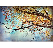 Fallen For Fall Photographic Print