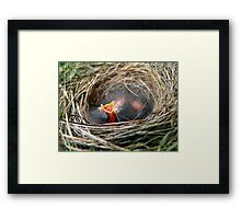 Baby Birds in Nest Framed Print
