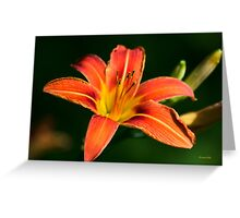 Orange Lily Flower Art Greeting Card