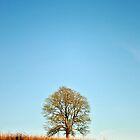 Warm Tree by luckycatphotos
