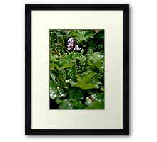 Purple Bells Framed Print
