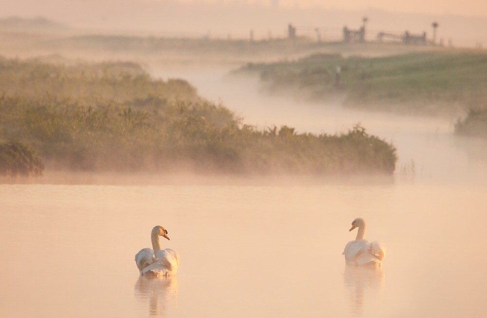 A misty day by THHoang