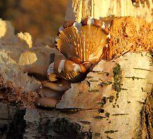 A Fungi to Love by John Dunbar