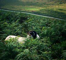 The Lone Sheep by J Bonanno