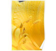 Very yellow lens reversal flower stamen pollen macro 1 Poster