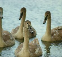 Ugly Ducklings by CliveSluter