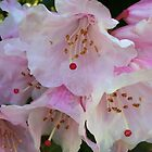 Rhododendron pink by Julie Van Tosh Photography