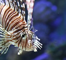LionFish by BEECOOL