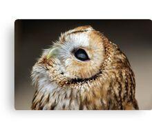 Tawny owl gazing skywards Canvas Print