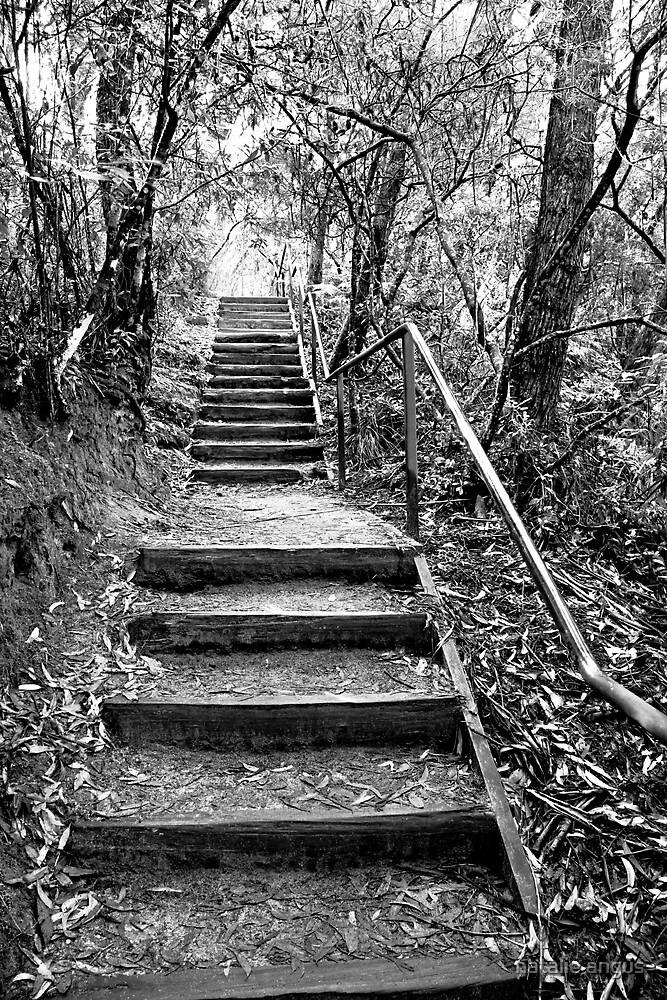 the stairs by natalie angus