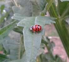 Lady bug 2012  by leih2008