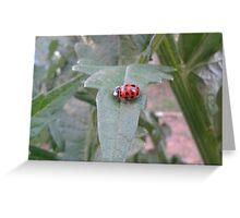Lady bug 2012  Greeting Card