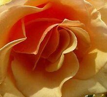 Center Floral; Patricia Merz Gr. Hills 2012 by leih2008