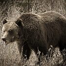 Mr. Grizzly by Pam Hogg