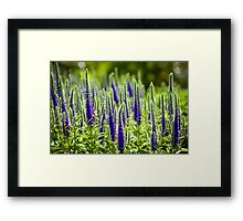 Seeing the forest for the trees Framed Print