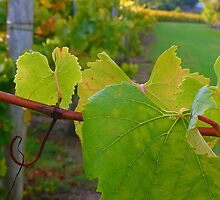 heard it on the grapevine  by manda76