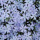 Blue by Sandra Fortier
