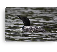 First Loon of the Season Canvas Print