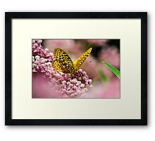 Orange Fritillary Butterfly Art Framed Print