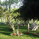 My yard by stirlingacre