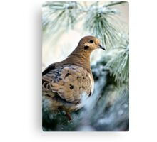 Winter Mourning Dove Canvas Print