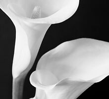Lillies by Lee LaFontaine