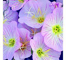 Purple Squared Photographic Print