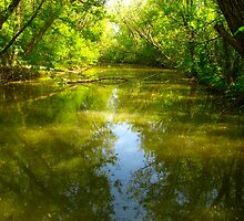 The Rouge River is really green! by MarianBendeth